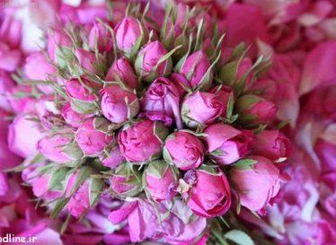 خواص زیبایی گل سرخ برای پوست و مو